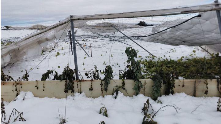 Madrid ofrece 16 millones de euros en ayudas para los agricultores y ganaderos afectados por Filomena