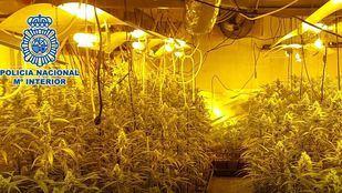 Desmanteladas dos instalaciones de cultivo rotativo de marihuana