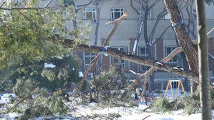 Madrid ya ha revisado el arbolado de 1.600 calles, pero advierte del riesgo por viento