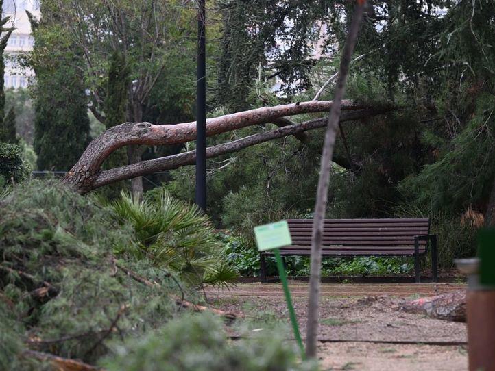 Algunos parques de Madrid continúan cerrados semanas después del temporal Filomena