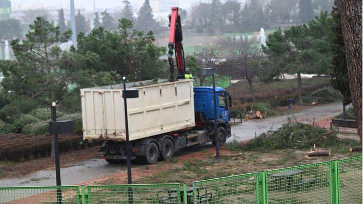 Un operario revisa uno de los parques de la capital tras el paso de la borrasca Filomena