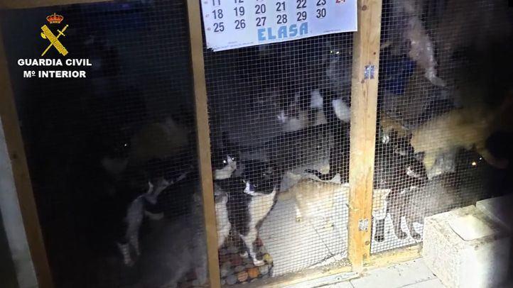 Intervenida en Arganda una protectora con más de 50 gatos en pésimo estado