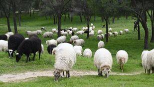 La nueva PAC remata a ganaderos y agricultores, aún sin recuperarse de Filomena