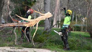 Trabajos para recuperar los árboles del Retiro tras el temporal.