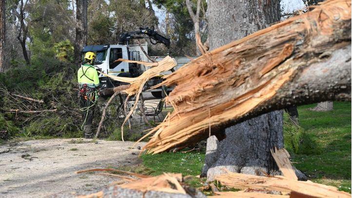 Cibeles acuerda unánime un plan de reforestación global para recuperar el patrimonio verde