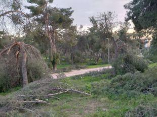El Pinar de la Elipa continúa con los árboles y ramas en el suelo tras un mes y medio del paso de Filomena