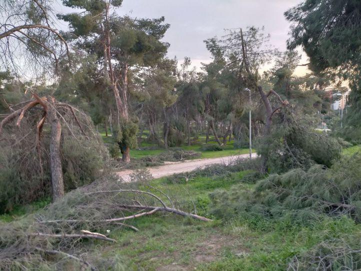 El Pinar de la Elipa, un parque