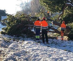 Así trabajan los técnicos de Valoriza Medioambiente en la recuperación de los árboles dañados