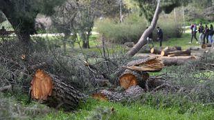 Casa de Campo sigue con árboles y ramas caídas dos meses después del paso de Filomena