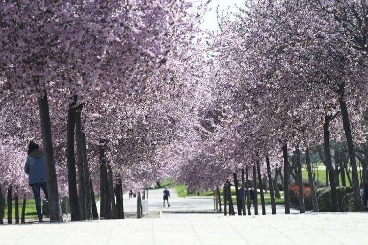 Llega la primavera a Madrid