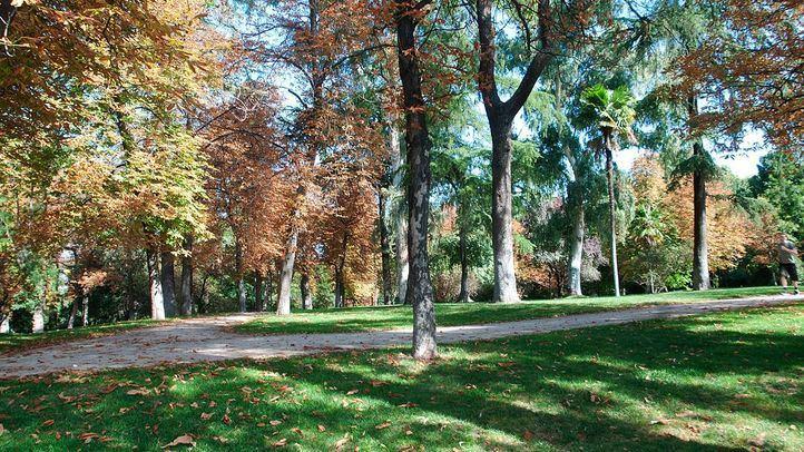 Madrid, reconocida por segundo año consecutivo como 'Ciudad arbórea del mundo'