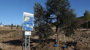 El 'Bosque de los Abrazos Perdidos': homenaje a las víctimas del Covid