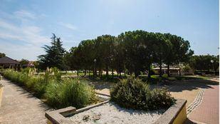 Varios municipios madrileños, reconocidos como 'Ciudades arbóreas del mundo'
