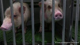 Suspendida la actividad investigadora de Vivotecnia tras constatar indicios de maltrato animal