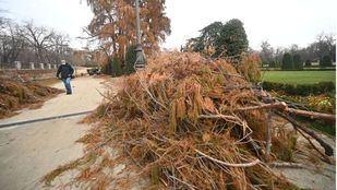 Trabajos para recuperar los árboles del Retiro tras el temporal
