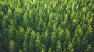 CaixaBank compensó las emisiones de CO₂ derivadas de su actividad durante 2019 con el apoyo a un proyecto para proteger más de 27.000 hectáreas de bosque amazónico en Brasil.