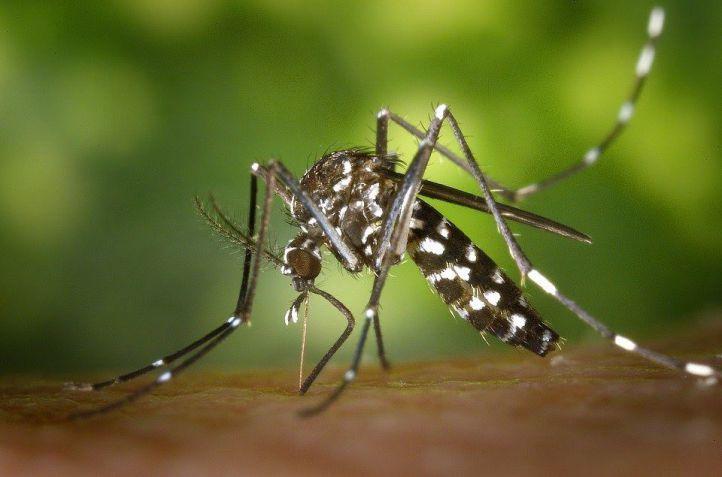 Ayudar a combatir las irritaciones de la piel tras las picaduras de mosquito, la gran molestia del verano