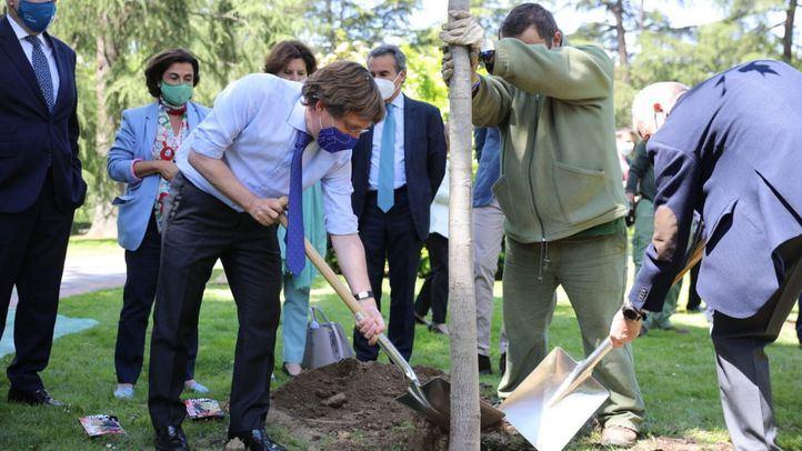 'Re-Planta Madrid', una campaña de crowdfunding para recuperar 10.000 árboles tras Filomena