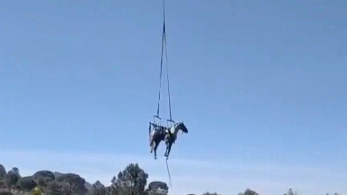 Rescatado un caballo que había caído a un foso en Valdemaqueda