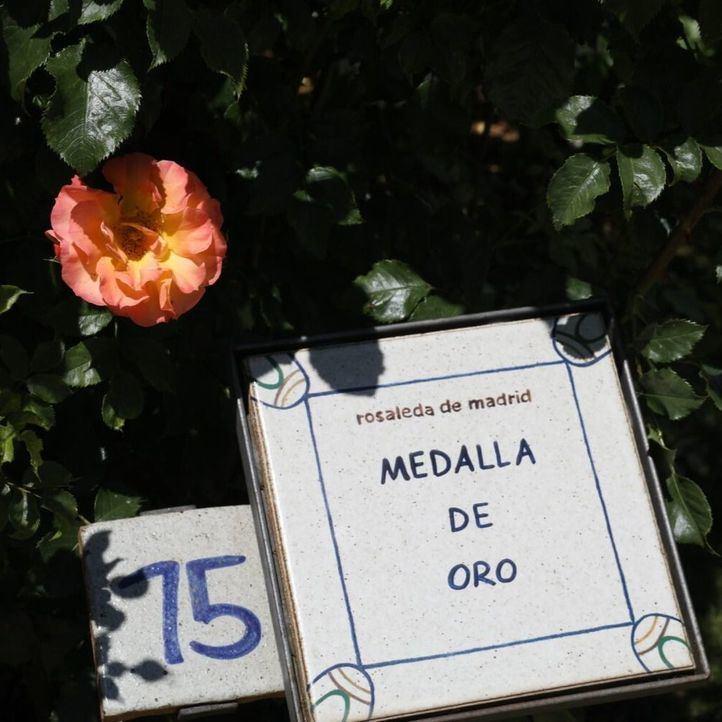 Pódium francés en el Concurso Internacional Rosa Villa de Madrid