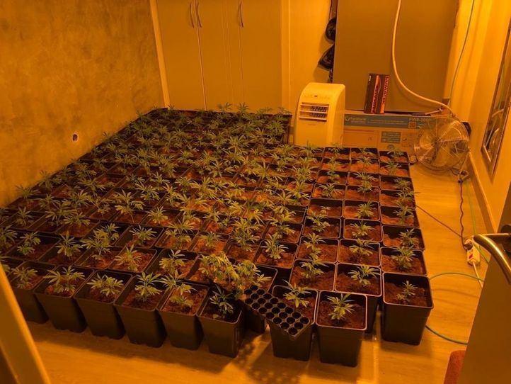 Incautadas 150 plantas de marihuana en una vivienda de Parla