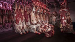 Los ganaderos, en pie de guerra contra Garzón tras aconsejar comer menos carne