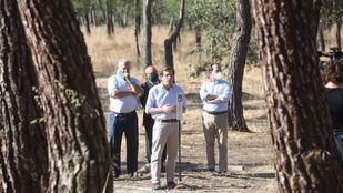 Madrid plantará 100.000 árboles para reponer los caídos por Filomena