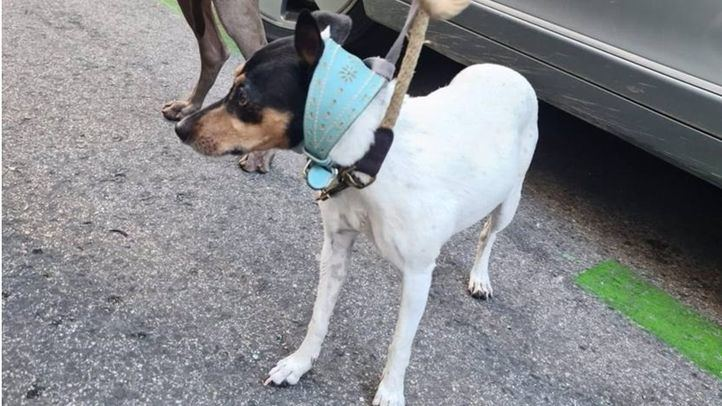 Perros rescatados de un maletero
