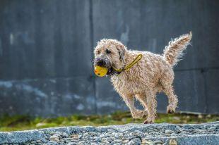 La herramienta perfecta para encontrar cuidadores de perros en Madrid este verano