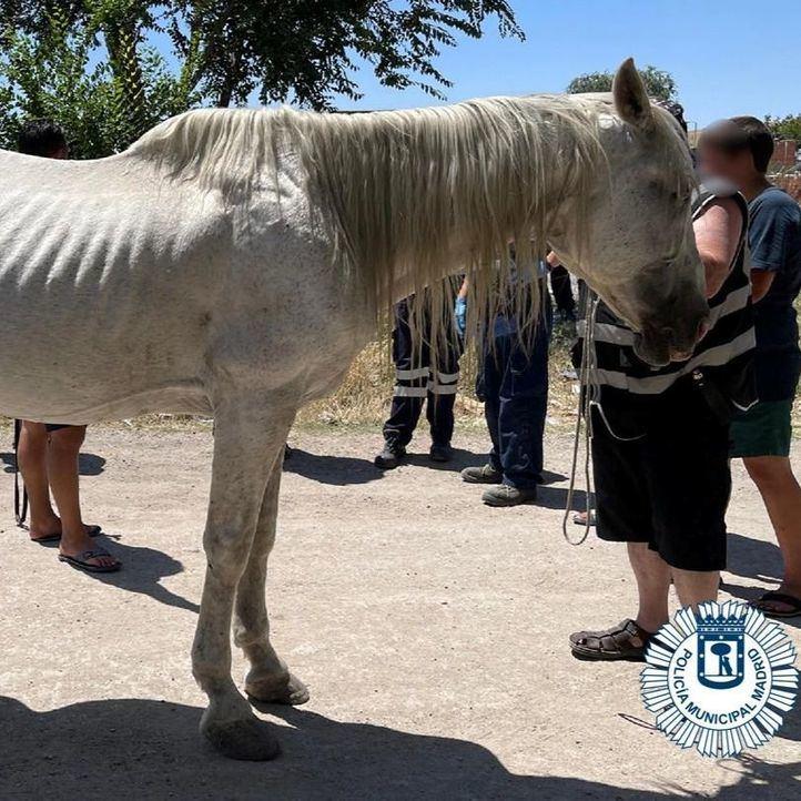 Rescatado un caballo deshidratado que llevaba días vagando por la Cañada Real