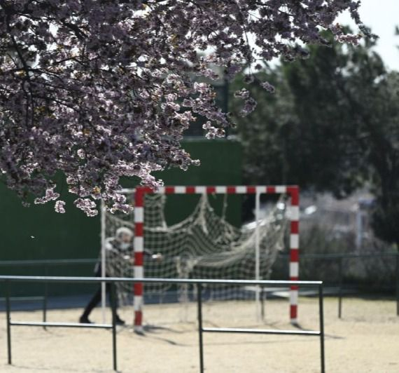 Almendros en flor en el Parque Juan Carlos I