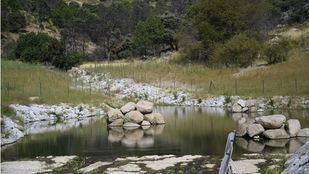La antigua presa de La Alberca se convierte en uno de los hábitat de anfibios más importantes de Europa