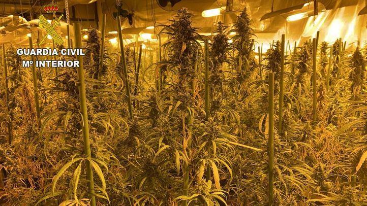 La Guardia Civil incauta 7.457 plantas de marihuana en una macrooperación en Toledo y Madrid