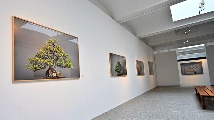 `Momentum´, la exposición fotográfica de bonsáis del Jardín Botánico