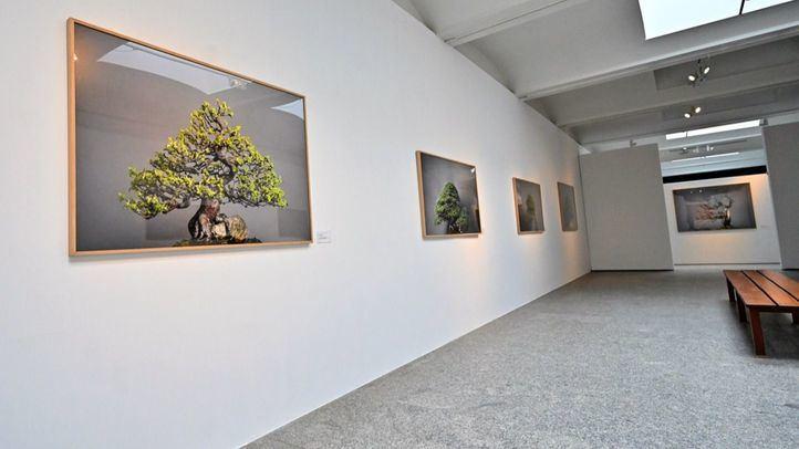 Exposición `Momentum´ en el Jardín Botánico.