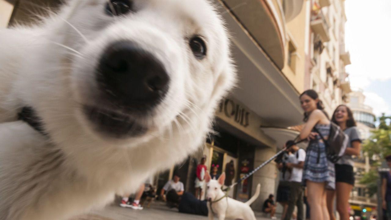 Unos 6.000 perros de todas las razas se dan cita en 100x100 Mascota 2021