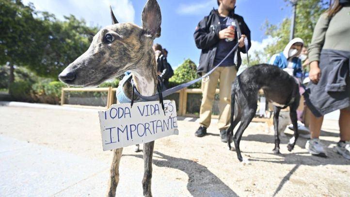 Un grupo de animalistas exige la puesta en libertad de los animales de Vivotecnia