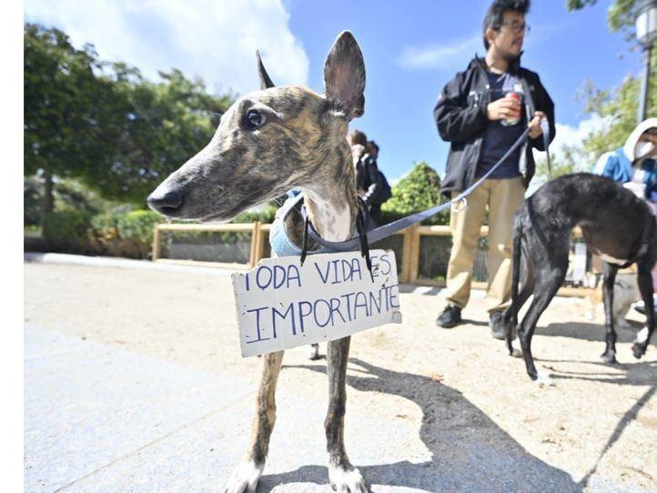 Un centenar de personas exige en Madrid 'respeto y protección' para los animales