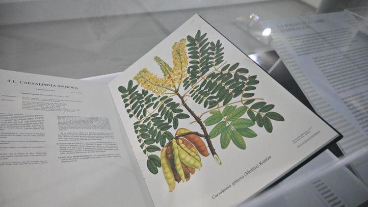 España y Colombia, unidas en el Real Jardín Botánico