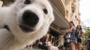 Nueva Ley de Protección y Derechos de los Animales