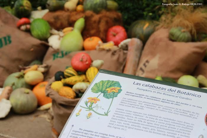 Exposición de calabazas en el Jardín Botánico