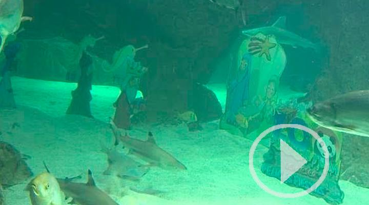 La Navidad llega al Zoo de Madrid con su Belén acuático