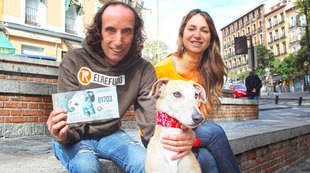 Eneas, el galgo elegido para la campaña de Lotería de Navidad de El Refugio