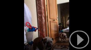 El Refugio recoge dos perros de un ingresado por COVID-19