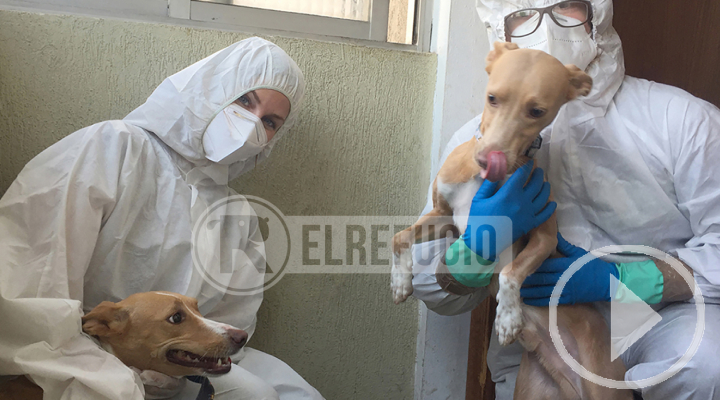 La unidad de interveción de El Refugio rescata a Kika y Yeste