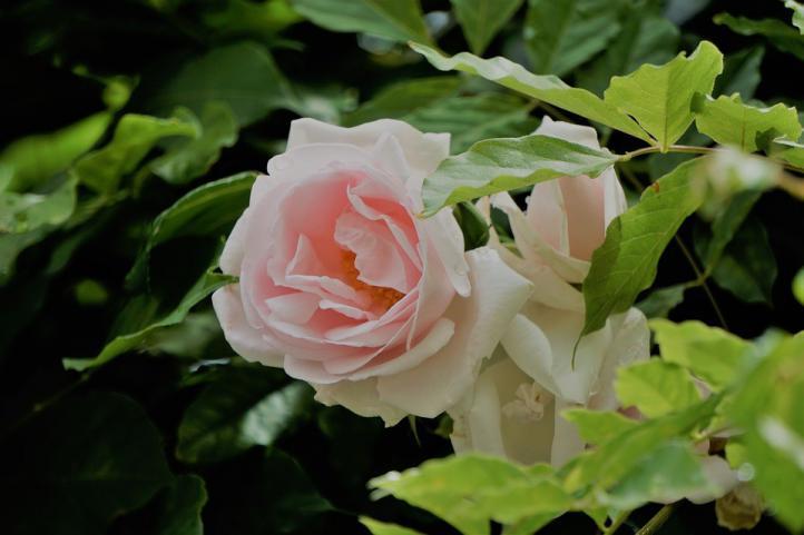 Nuevas tendencias en el envío de flores y coronas funerarias