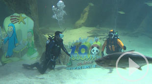 Inaugurado el Belén de tiburones del Zoo de Madrid
