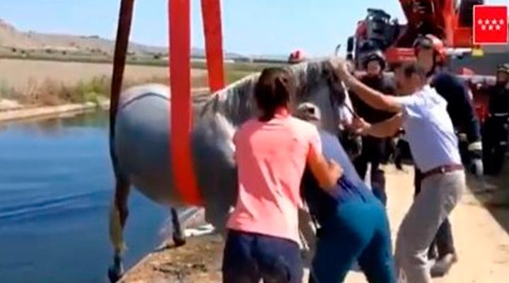 Bomberos de Madrid rescatan a un caballo en un canal