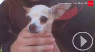 Así ha sido el rescate de este perro atrapado en una puerta metálica por los Bomberos de la Comunidad