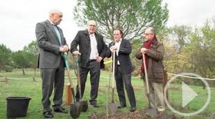 La Comunidad clona árboles singulares para perpetuar el patrimonio natural